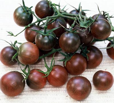 black krim tomate