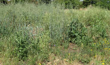 Green, Weedy Areas Beyond Vegetable Garden Have Relatives Wondering Why You  Are Soooo Lazy?